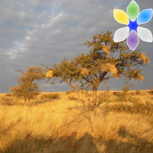 Reforesting with Drought Tolerant Trees in Kenya
