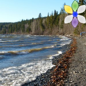 Clam Gardens Restore Coastal Health and Indigenous Cultures
